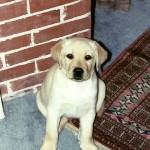 Utley as a puppy