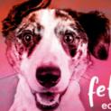 Pet Vet Mat is going to Fetch DVM360 May 2-6!